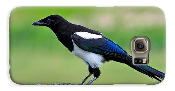 Black Billed Magpie Galaxy S6 Case by Karon Melillo DeVega