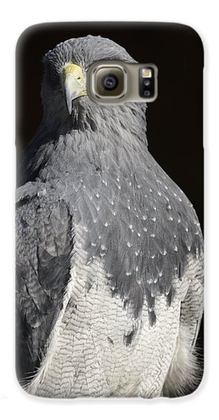 Black Chested Buzzard-eagle No 1 Galaxy S6 Case by Andy-Kim Moeller