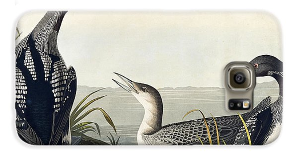 Black Throated Diver  Galaxy S6 Case by John James Audubon