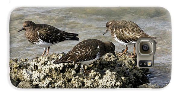 Black Turnstones Feeding Galaxy S6 Case by Bob Gibbons