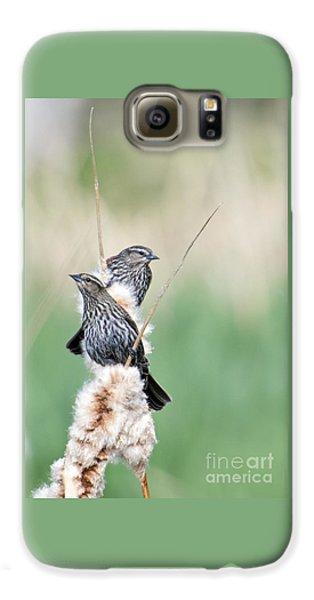 Blackbird Pair Galaxy S6 Case by Mike  Dawson