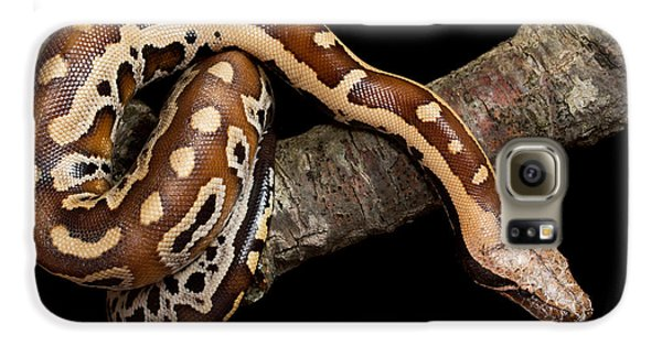 Blood Python Python Brongersmai Galaxy S6 Case by David Kenny