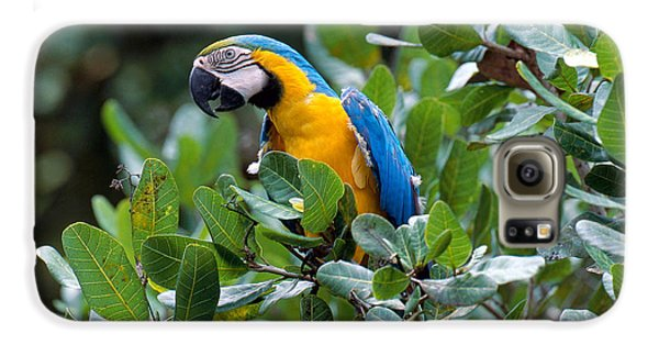 Blue And Yellow Macaw Galaxy S6 Case by Art Wolfe