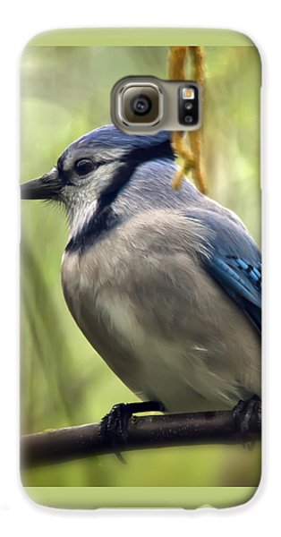 Blue Jay On A Misty Spring Day - Square Format Galaxy S6 Case by Lois Bryan