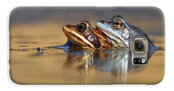 Blue Love ... Mating Moor Frogs  Galaxy S6 Case by Roeselien Raimond