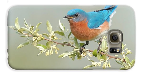 Bluebird Floral Galaxy S6 Case by William Jobes