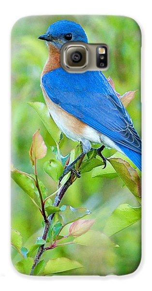 Bluebird Joy Galaxy S6 Case by William Jobes