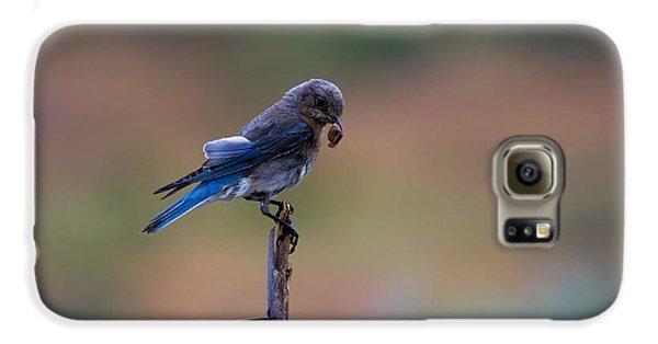 Bluebird Lunch Galaxy S6 Case by Mike  Dawson