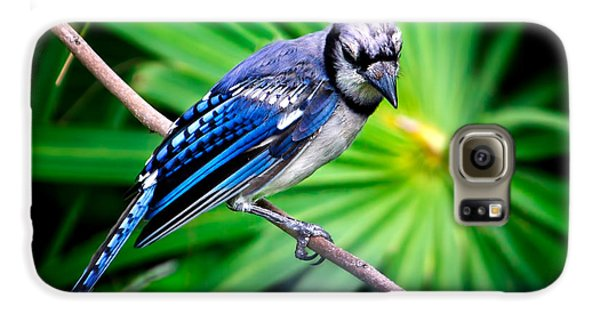 Thoughtful Bluejay Galaxy S6 Case by Mark Andrew Thomas