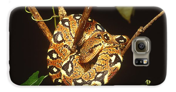 Boa Constrictor Galaxy S6 Case by Art Wolfe