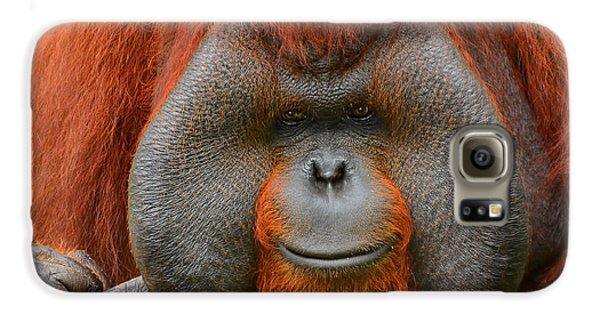 Bornean Orangutan Galaxy S6 Case by Lourry Legarde