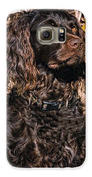 Boykin Spaniel Portrait Galaxy S6 Case by Timothy Flanigan