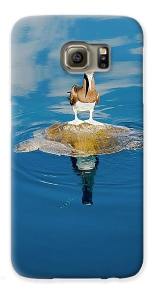 Brown Booby And Marine Turtle Galaxy S6 Case by Christopher Swann