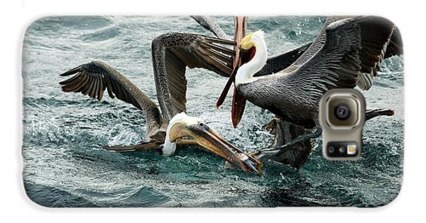 Brown Pelicans Stealing Food Galaxy S6 Case by Christopher Swann