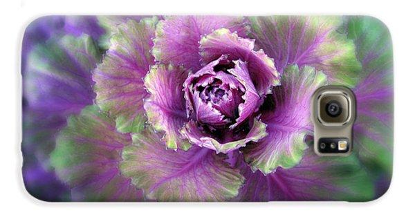Cabbage Flower Galaxy S6 Case by Jessica Jenney