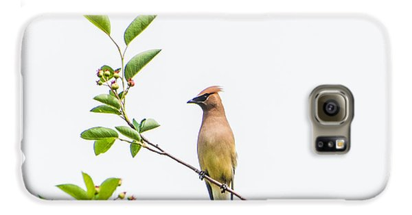 Cedar Waxwing Galaxy S6 Case by Kathy Schreiber-Castrataro