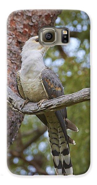 Channel-billed Cuckoo Fledgling Galaxy S6 Case by Martin Willis