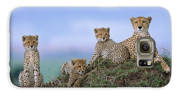 Cheetah Mother And Cubs Masai Mara Galaxy S6 Case by Yva Momatiuk John Eastcott