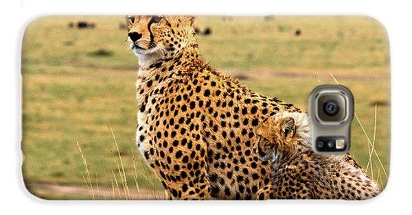 Cheetahs Galaxy S6 Case by Babak Tafreshi