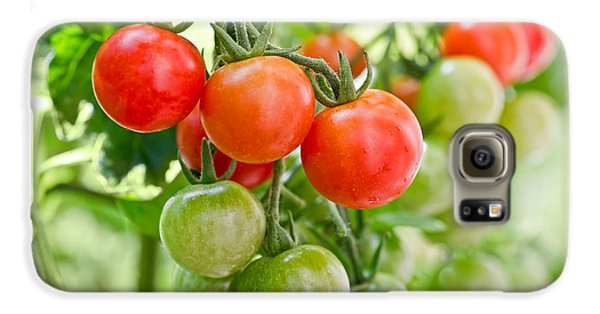 Cherry Tomatoes Galaxy S6 Case by Delphimages Photo Creations