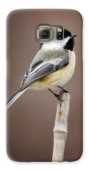 Chickadee Galaxy S6 Case by Bill Wakeley