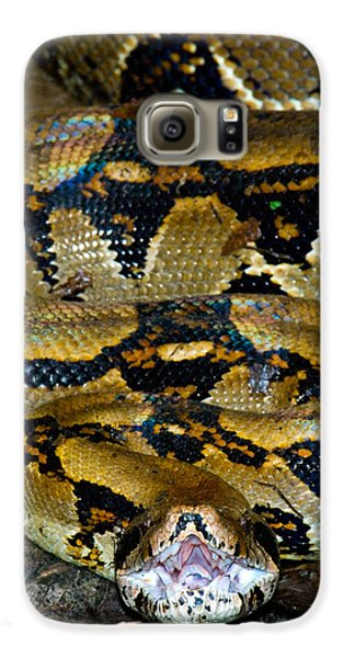 Close-up Of A Boa Constrictor, Arenal Galaxy S6 Case by Panoramic Images