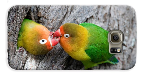 Close-up Of A Pair Of Lovebirds, Ndutu Galaxy S6 Case by Panoramic Images
