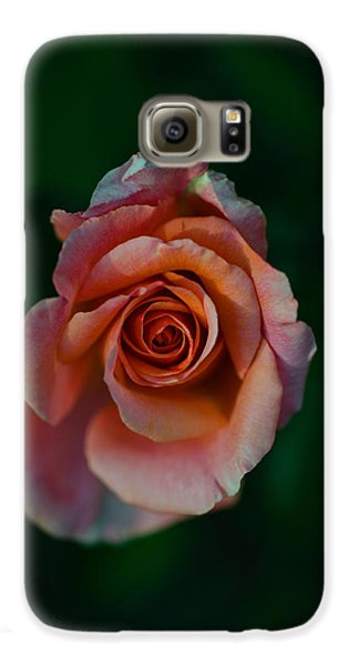 Close-up Of A Pink Rose, Beverly Hills Galaxy S6 Case by Panoramic Images