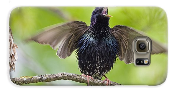 Common Starling Singing Bavaria Galaxy S6 Case by Konrad Wothe
