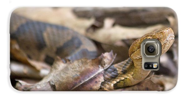Copperhead In The Wild Galaxy S6 Case by Betsy Knapp