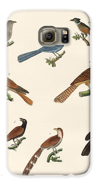 Cuckoos From Various Countries Galaxy S6 Case by Splendid Art Prints