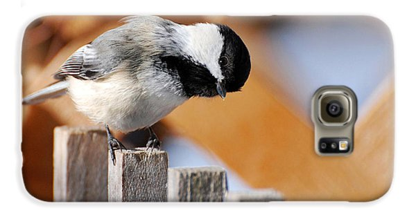 Curious Chickadee Galaxy S6 Case by Christina Rollo