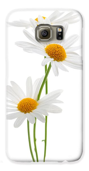 Daisies On White Background Galaxy S6 Case by Elena Elisseeva