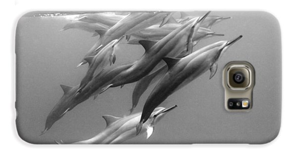 Dolphin Pod Galaxy S6 Case by Sean Davey