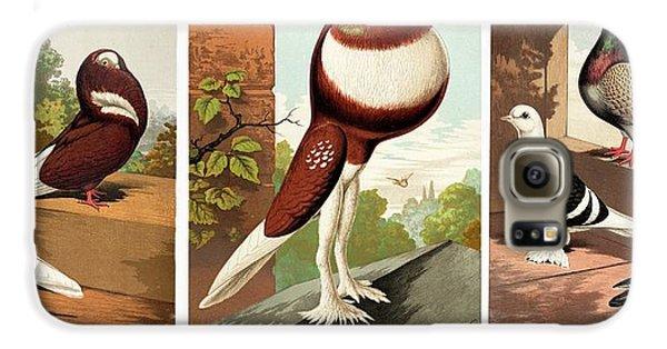 Domestic Fancy Pigeon Breeds Galaxy S6 Case by Paul D Stewart