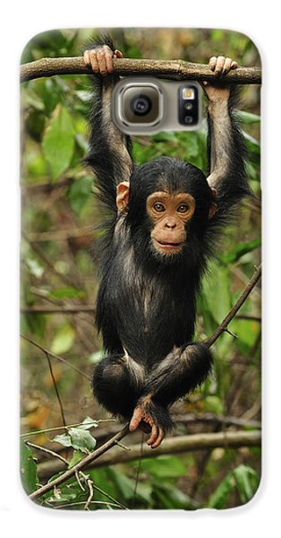 Eastern Chimpanzee Baby Hanging Galaxy S6 Case by Thomas Marent
