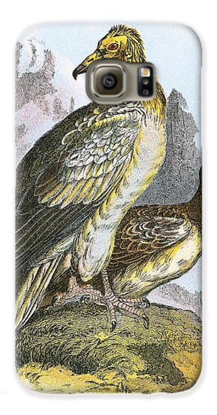 Egyptian Vulture Galaxy S6 Case by English School