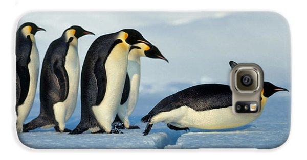 Emperor Penguin Aptenodytes Forsteri Galaxy S6 Case by Hans Reinhard