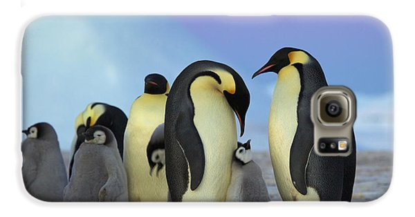 Emperor Penguin Parents And Chick Galaxy S6 Case by Frederique Olivier