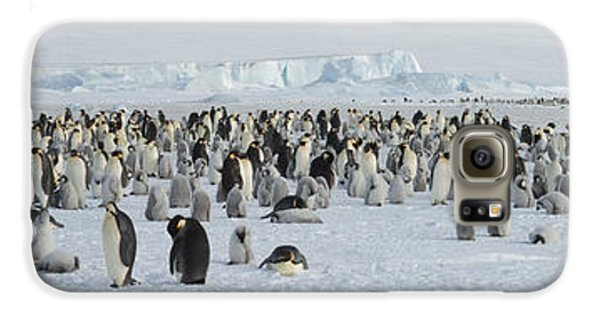 Emperor Penguins Aptenodytes Forsteri Galaxy S6 Case by Panoramic Images