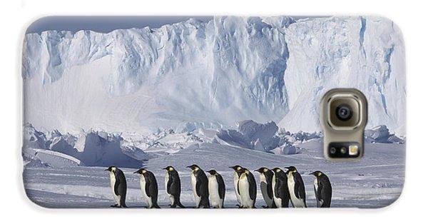 Emperor Penguins Walking Antarctica Galaxy S6 Case by Frederique Olivier