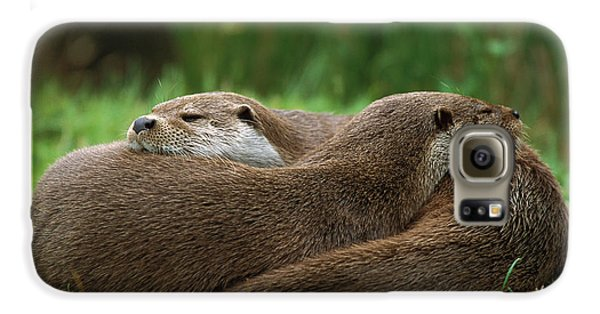 European River Otter Lutra Lutra Galaxy S6 Case by Ingo Arndt