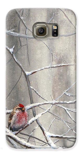 Eyeing The Feeder Alaskan Redpoll In Winter Galaxy S6 Case by Karen Whitworth
