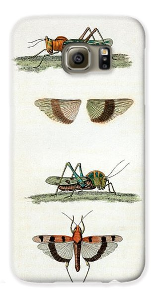 Field Crickets Galaxy S6 Case by General Research Division/new York Public Library