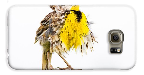 Flluffy Meadowlark Galaxy S6 Case by Bill Swindaman