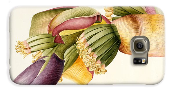 Flower Of The Banana Tree  Galaxy S6 Case by Georg Dionysius Ehret