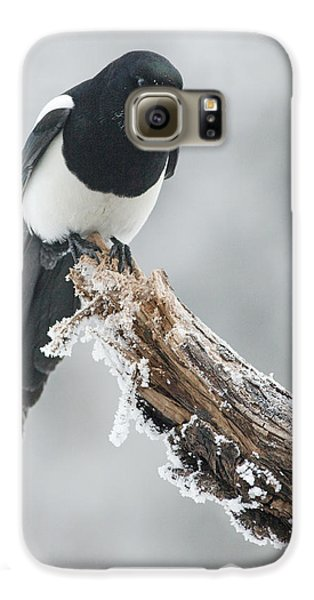 Frosted Magpie Galaxy S6 Case by Tim Grams