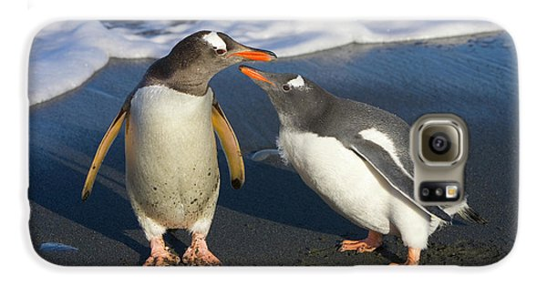 Gentoo Penguin Chick Begging For Food Galaxy S6 Case by Yva Momatiuk and John Eastcott
