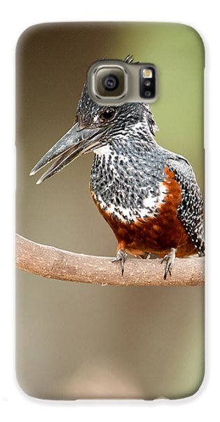 Giant Kingfisher Megaceryle Maxima Galaxy S6 Case by Panoramic Images