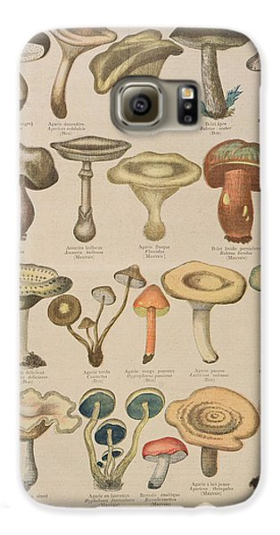 Good And Bad Mushrooms Galaxy S6 Case by French School